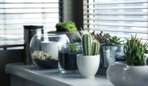 Plants in pots on the table.
