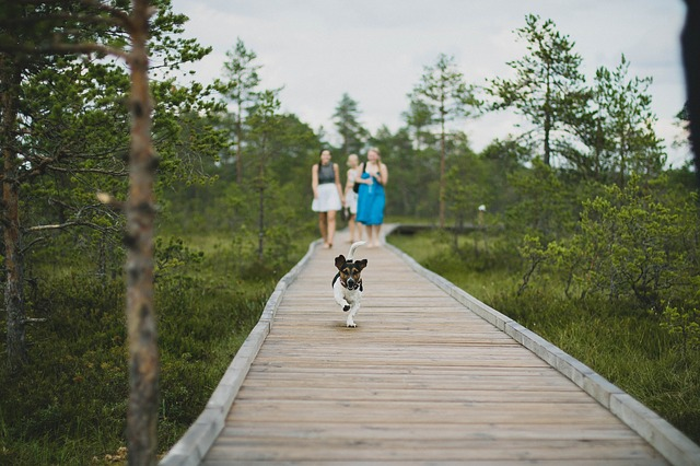 A dog running in front of people on the path