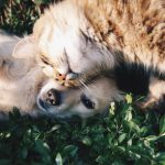 tips on how to keep your pets safe when moving
