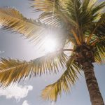 photography of palm tree during daytime