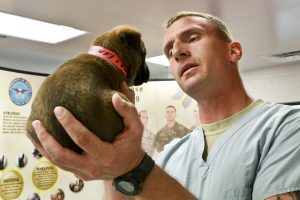 vet holds a puppy