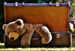Teddy bear in a suitcase.