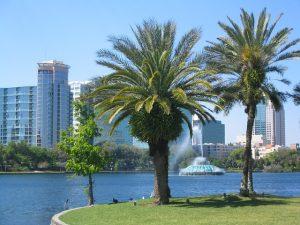 Palms in Orlando