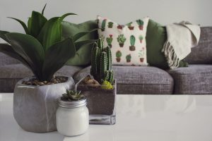 three vases with plants on a coffee table and a couch